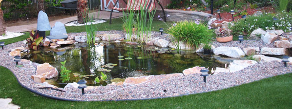Home pond ecosystem picture.